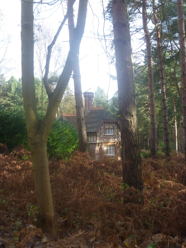 Little Cottage in a Wood