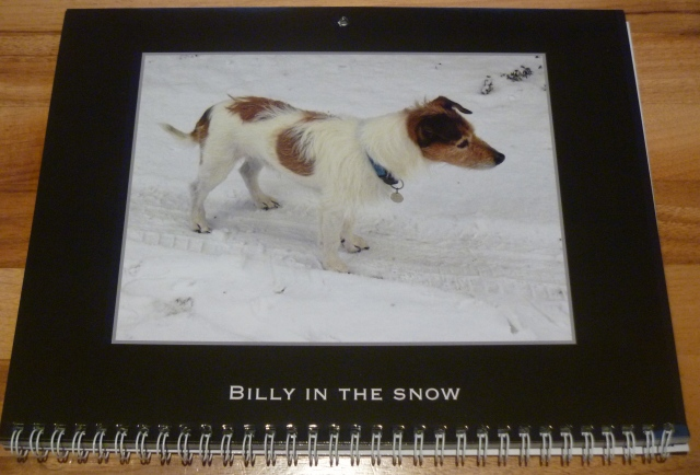 Billy in snow