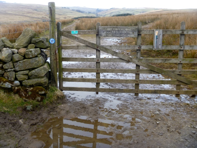Muddy moor lane