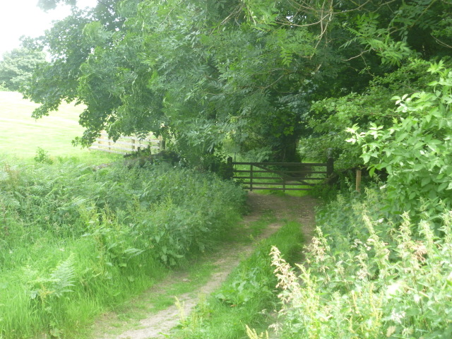 The Drovers' Track