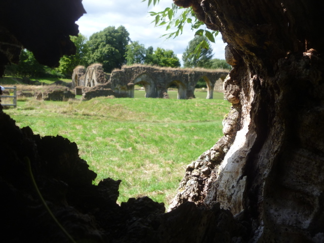 Abbey through tree
