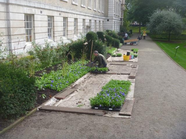 Inner t garden
