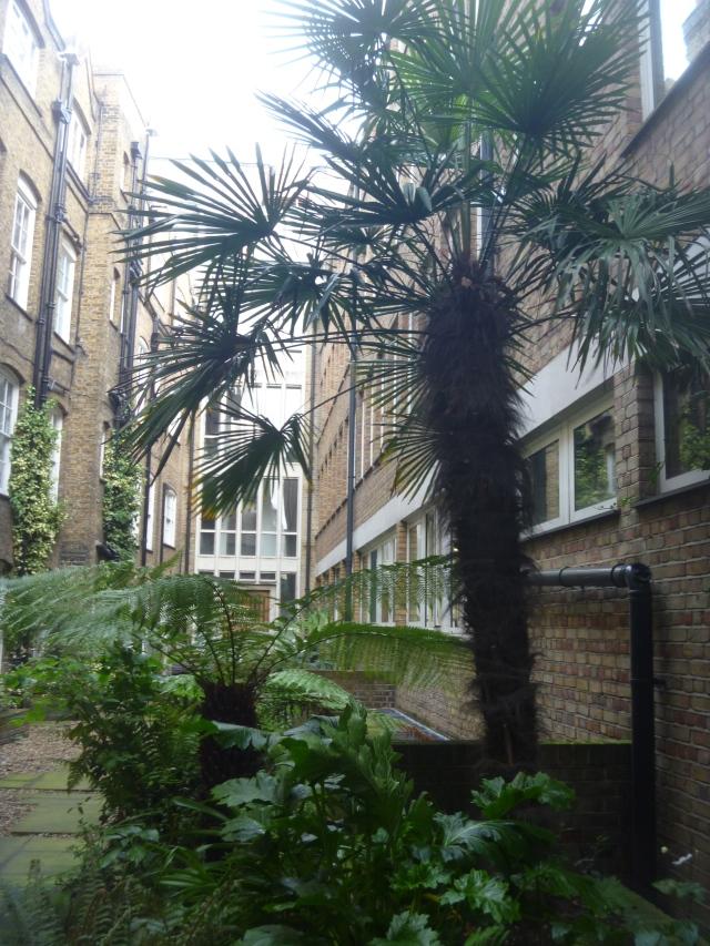 Lincolns Inn dry garden