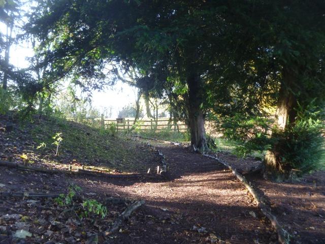 BCTV path through shrubbery