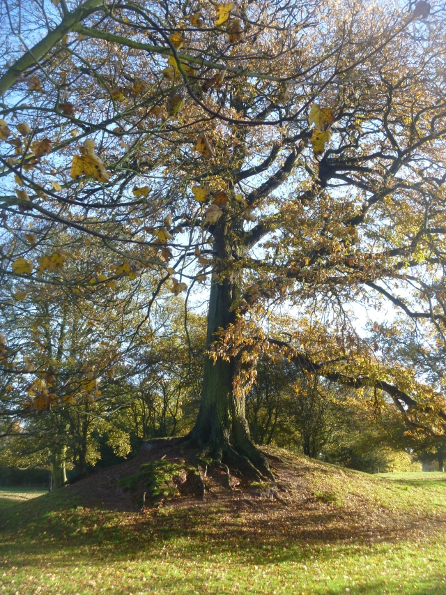 Viewing mound and old oak