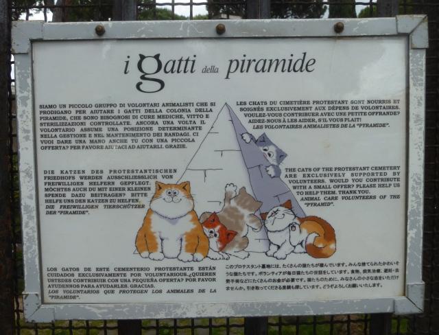 Pyramid cats