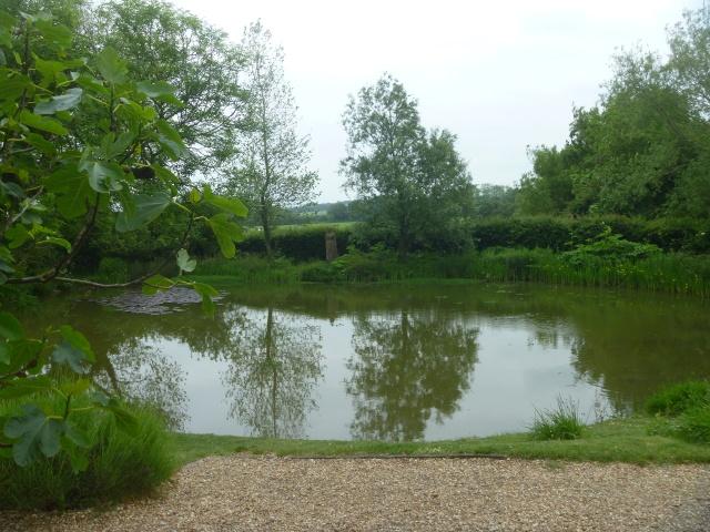 Charleston Pond