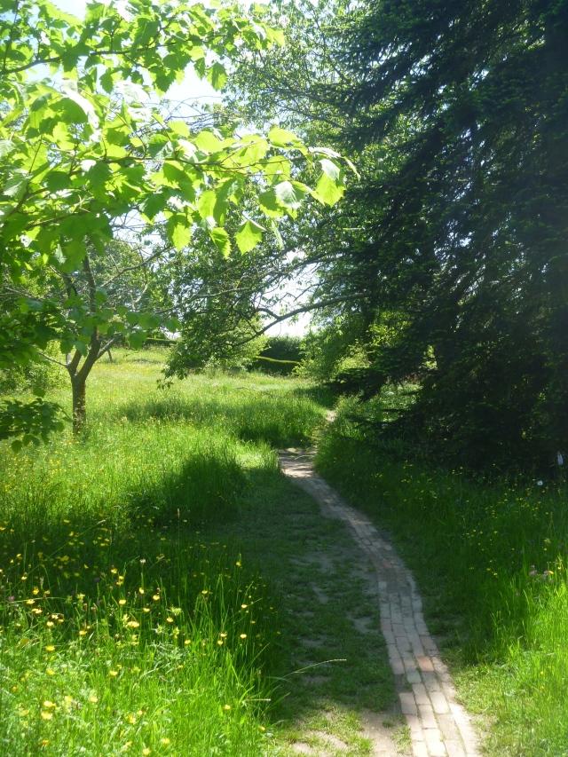 Meadow path