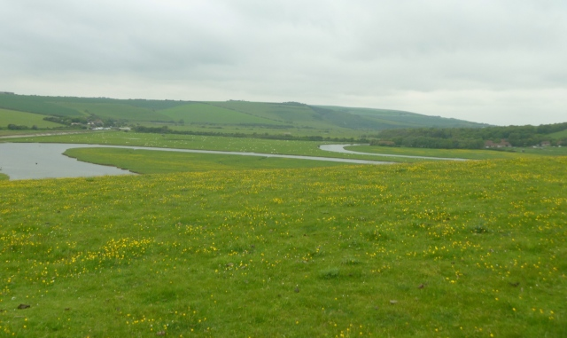 Meanders and Buttercups