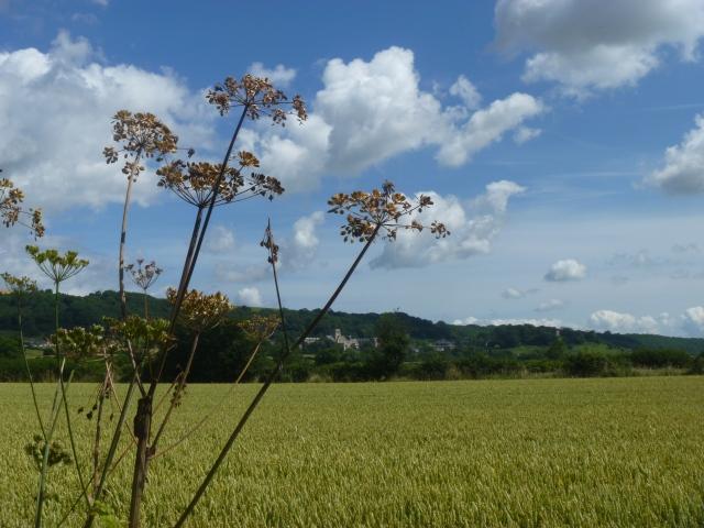 Abbey from field
