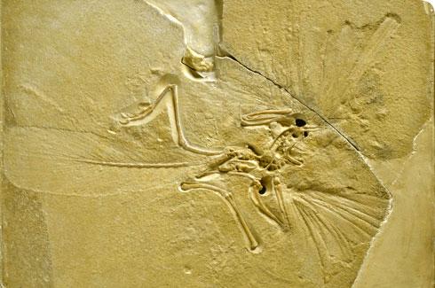 archaeopteryx-banner_112755_1
