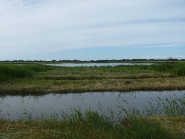 Hickling from hide
