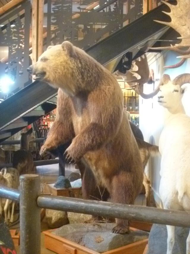 Nearest I came to a bear
