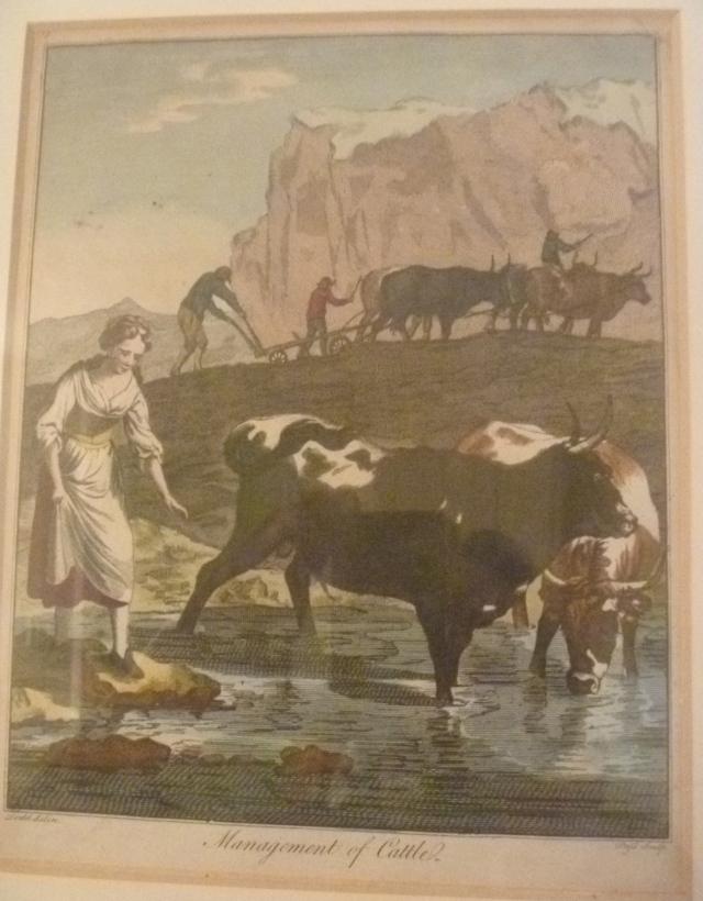 Swiss Cow management SC