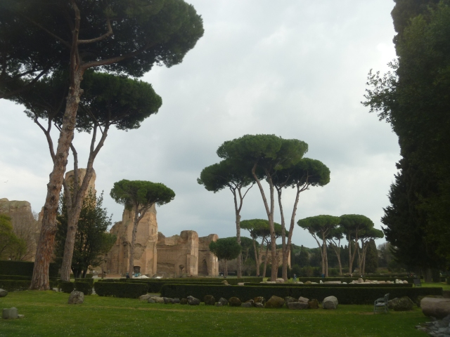 cypress trees in gardens