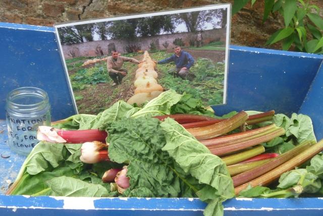 Rhubarb for sale