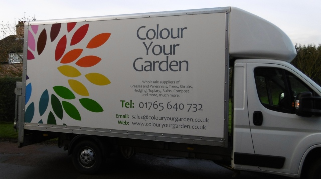 colour your garden