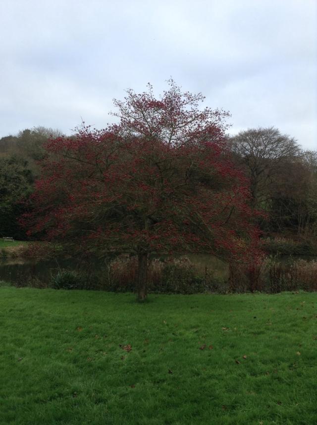 hascombe pond