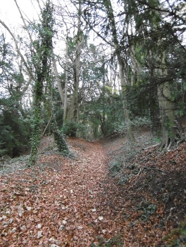 track hascombe hill