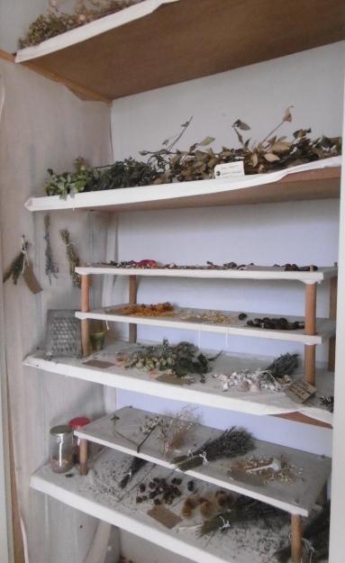 drying herbs in still room