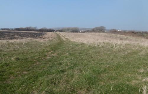 nitten field