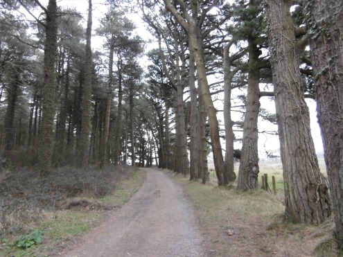 Whiteford Woods path