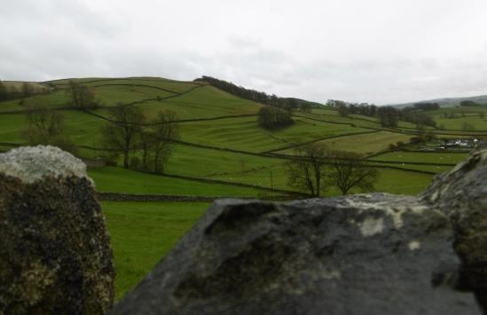 ancient field patterns