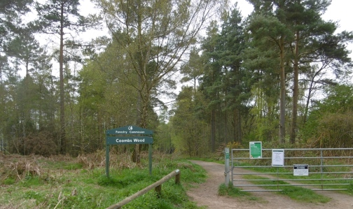coombs wood