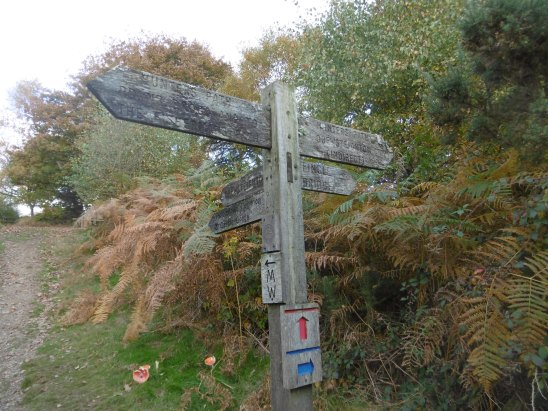 signpost-and-toadstools