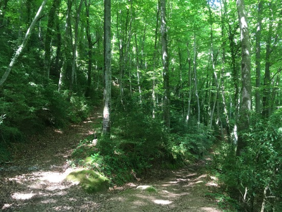 typical beech forest paths