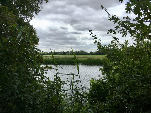glimpse of great ouse